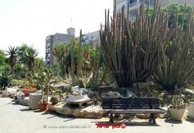 גן הקקטוסים בחולון   צילום: מוטי ישר
