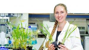 דר' ולנטינה קלימיוק, אוניברסיטת חיפה, זוכת פרס (Jeanie Borlaug (WIT לשנת 2019, עם צמחי חיטה נגועים במחלת החילדון הצהוב | צילום: אוניברסיטת חיפה | עיבוד צילום: שולי סונגו