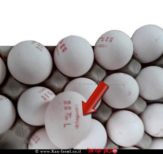 מספר ביצים מתוך כ-18,000 שהוחרמו על ידי משרד החקלאות | צילום דוברות משרד החקלאות | עיבוד צילום: שולי סונגו