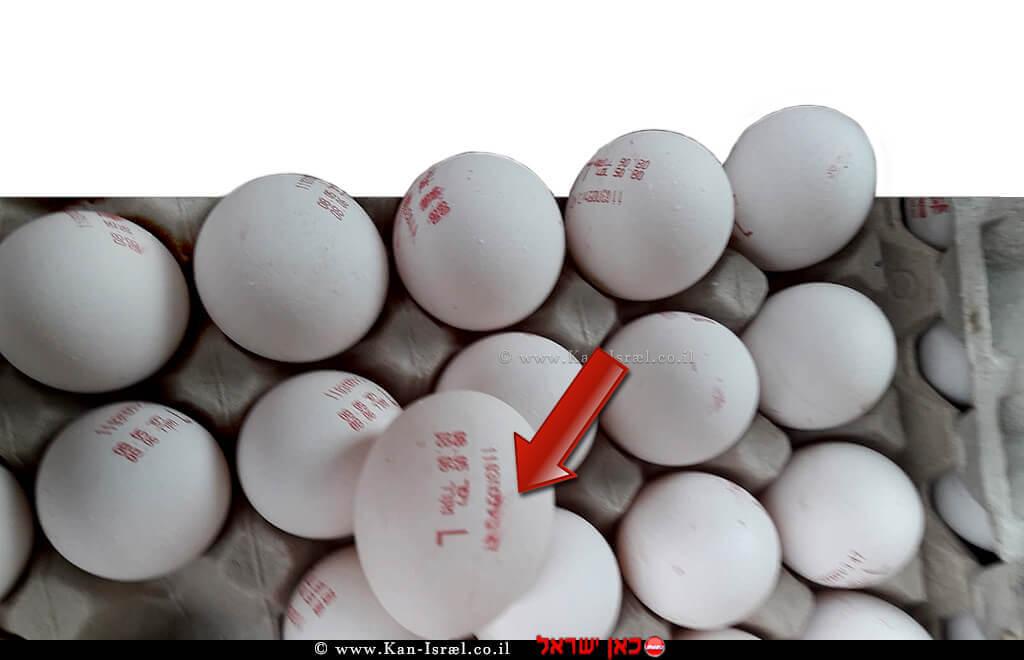 מספר ביצים מתוך כ-18,000 שהוחרמו על ידי משרד החקלאות   צילום דוברות משרד החקלאות   עיבוד צילום: שולי סונגו