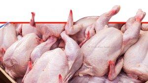 בשר עוף טרי, צפוי מחסור ברשתות השיווק בשל חג עיד אל פיטר | עיבוד צילום: שולי סונגו ©