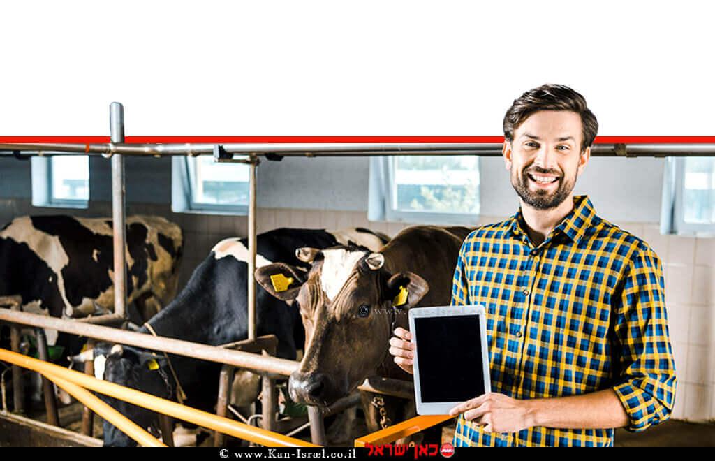 רפתן בודק באמצעות טאבלט מחשב לוח נייד את צינון וקירור הרפת ותפוקת החלב | עיבוד צילום: שולי סונגו ©
