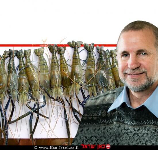 פרופ' אמיר שגיא, חבר במכון הלאומי לביוטכנולוגיה בנגב NIBN ברקע: ה'סוּפר סרטנים' | צילומים: דני מכליס, צילום: דר' אלי אפללו | עיבוד צילום ממחושב: שולי סונגו©