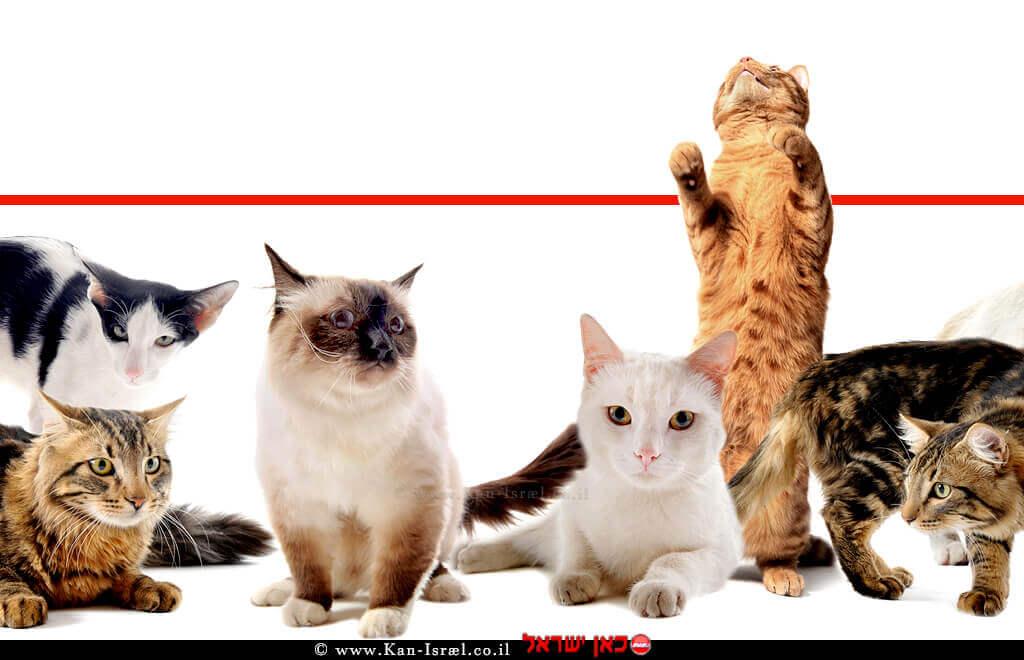 חתולים מסוגים שונים צילום: depositphotos | עיבוד ממחושב: שולי סונגו©