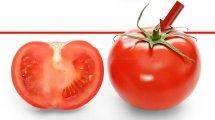עגבנייה ישראלית | צילום מתוך ויקיפדיה | עיבוד ממחושב: שולי סונגו©
