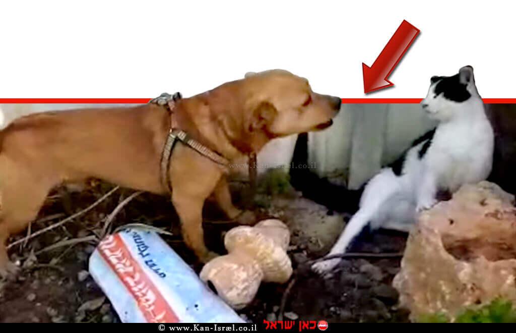 כלב חום תוקף חתוּל עיוור המתגונן מפניו | צילום: משרד החקלאות | עיבוד ממחושב: שולי סונגו©