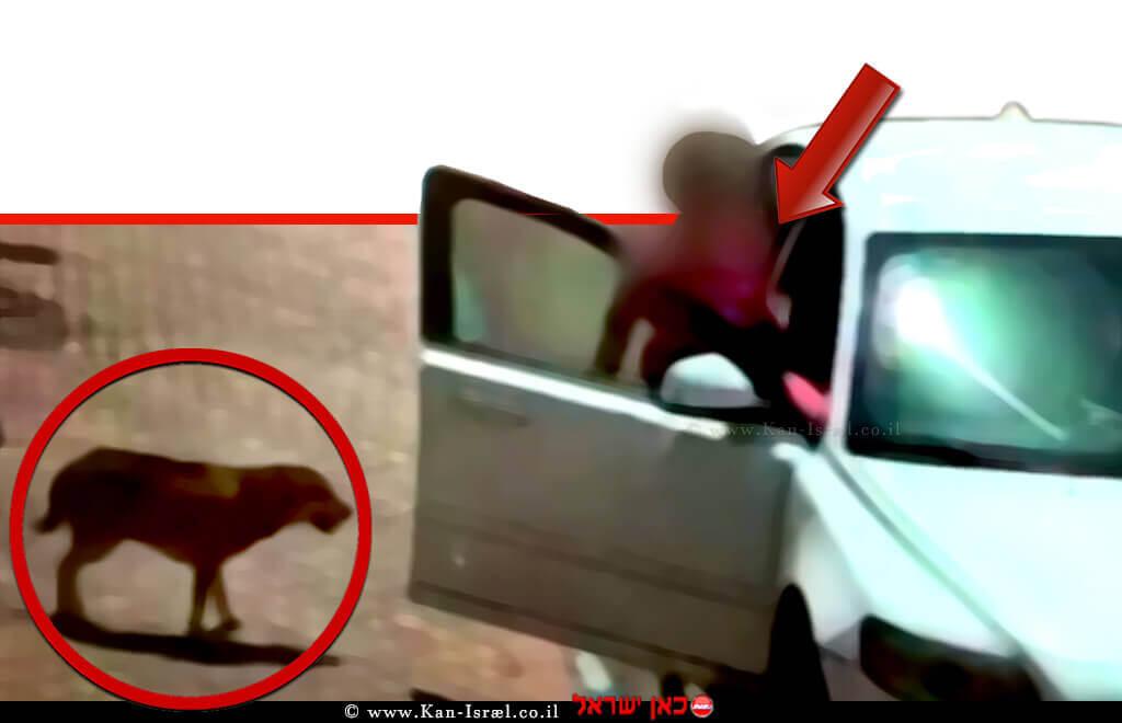 כלבה שננטשת על ידי אישה בתחנת דלק באילת, צילום מתוך סרטון מצלמות האבטחה | עיבוד: שולי סונגו©