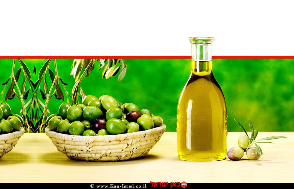 שמן זית - ישראליהכי טרי, הכי בריא, הכי ישראלי | עיבוד ממחושב: שולי סונגו©