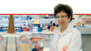 פרופ' ורדה שושן-ברמץ, במעבדה| צילום: דני מכליס, אוניברסיטת בן-גוריון בנגב | עיבוד ממחושב: שולי סונגו©
