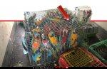 תוּכים שנגנבו מבית גידול בעיר מגדל העמק במשאית שנתפסה על ידי שוטרי משמר הגבול של משטרת ישראל| צילום: דוברות המשטרה