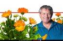 """אבי ציטרשפילר, הרבליסט, עשבונאי ובעל """"חוות דרך התבלינים"""" ברקע: קלנדולה-ציפורני חתול   צילום: רמי זרנגר   עיבוד צילום: שולי סונגו ©"""