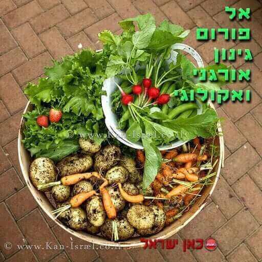 OrganicGardeningVegetables_512x512K-n_18-11-17_01-1.jpg