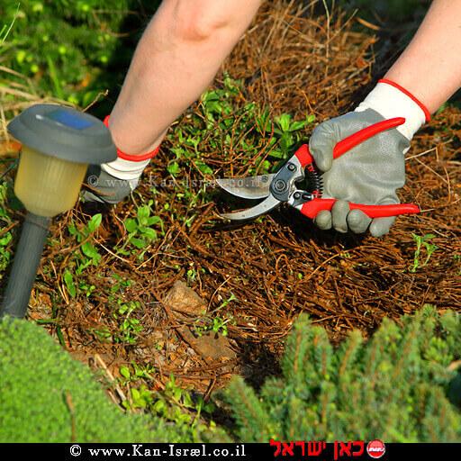 גיזום בגינה | עיבוד צילום ממחושב: שולי סונגו©