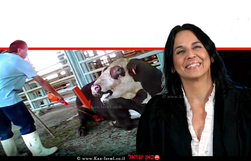 כב' השופטת דלית שרון-גרין, צילום:אתר הרשות השיפוטית | רקע: התעללות בפרות בבית שאן | צילום נדיר של העיתונאי ופעיל אנונימוס רונן בר| עיבוד צילום: שולי סונגו ©