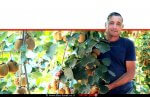 ירון בלחסן, מנכל ארגון מגדלי הפירות בין עצי מטעי הקיווי בקיבוץ מלכיה | עיבוד: שולי סונגו ©
