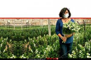 מעין קיטרון, מנהלת תחום פרחים במחקר ופיתוח ערבה תיכונה ברקע: חממת פרחים לשיווק מקומי ולייצוא | צילום - מופ ערבה תיכונה וצפונית | עיבוד צילום: שולי סונגו ©