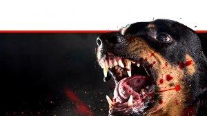 כלב רוטוויילר תוקף כנגוע כלבת עם כתמי דם בפיו ופניו |עיבוד צילום: שולי סונגו ©