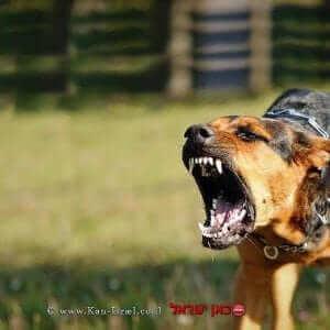 כלב חשוד במחלת הכלבת  |עיבוד צילום: שולי סונגו ©