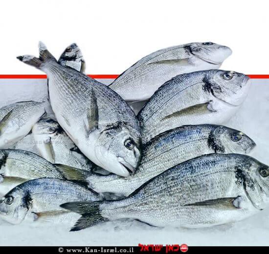שיווק דגים מהים התיכון בישראל | עיבוד צילום: שולי סונגו ©