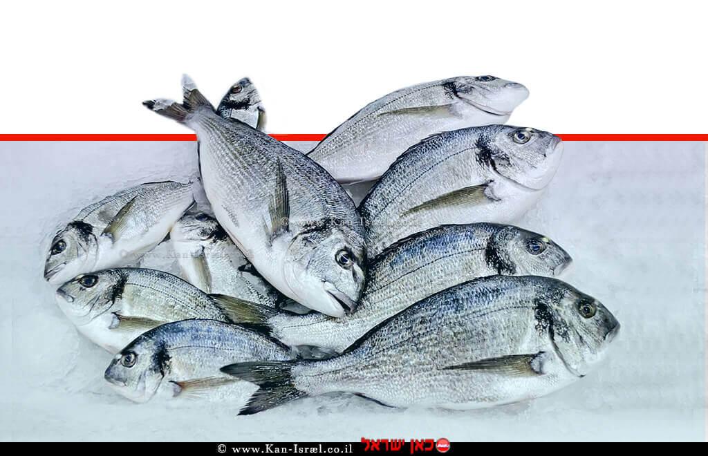 שיווק דגים מהים התיכון בישראל   עיבוד צילום: שולי סונגו ©