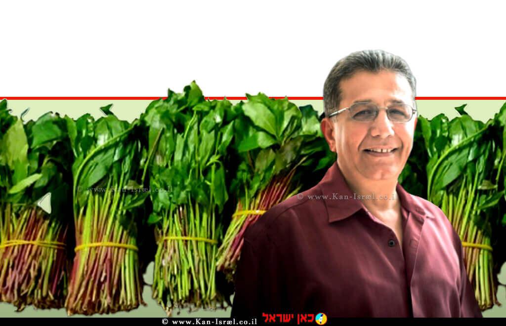 פרופ' עבד גרה, מנהל השירותים להגנת הצומח ולביקורת במשרד החקלאות ברקע: ניסיון לייצוא לא חוקי של גת במשלוח בזיליקום שסוּכל  עיבוד צילום: שולי סונגו ©