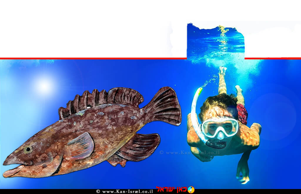"""מתוך כרזת """"מגלים את הים"""" של עמותת אקואושן  עיבוד צילום: שולי סונגו ©"""
