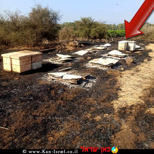 כוורות שהכילו כ-1 טון דבש בשטחי מרעה ונשרפו בסמוך לפארק הירדן | צילום: מכוורת סימנר הדבש של סבא | צילום: השומר החדש |עיבוד צילום: שולי סונגו ©